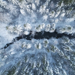 Aerial view of river and nordic forest covered by snow. Winter season.