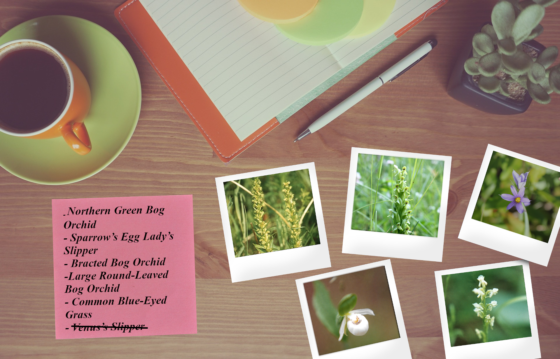 A desk with a small potted plant, a few photos of flowers and a note listing names