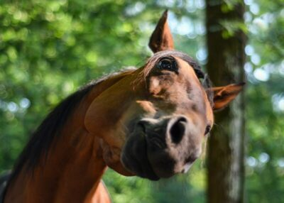 Horse with head tilted